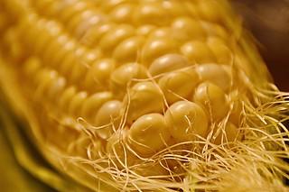 C For Corn & Caroline
