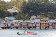 gull / at. ine bay (L.S.P. tokyo) Tags: kyotojapan