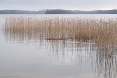 morningDSC6329 (Anne Kaihola) Tags: morning lake suomi finland jrvi d610 kirkkonummi aamu kaisla hvitrsk