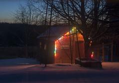 chicken barn (Lynn Carson Harris) Tags: winter snow barn dawn lights morninglight michigan christmaslights midwestwinter chickenbarn