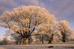 Hoare Frost !! (raybird299) Tags: trees winter nature gloucestershire frosts actonturville