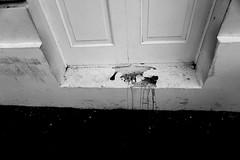 Crime scene (Carlos A. Aviles) Tags: door blood puerta entrance entrada sangre