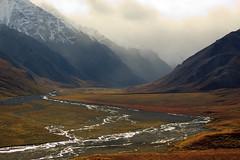 Have you ever Wandered? (Dan King Alaskan Photography) Tags: autumn alaska denalinationalpark toklatriver sigma80400mm canon50d