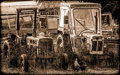 Tractors. . . (CWhatPhotos) Tags: pictures county old red 3 tractor cold weather sepia canon vintage that photography spring model holding day foto durham image artistic cloudy pics mark walk iii small over picture pic tint images have photographs photograph fotos 5d about dslr which mk grown contain interna tractos sacriston cwhatphotos