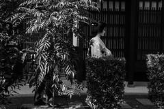 Geiko, Koyoshi near Kiyomizu-dera (jimmygap13) Tags: street kyoto candid maiko geiko