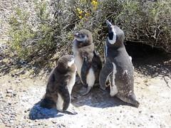 Puerto Madryn-66