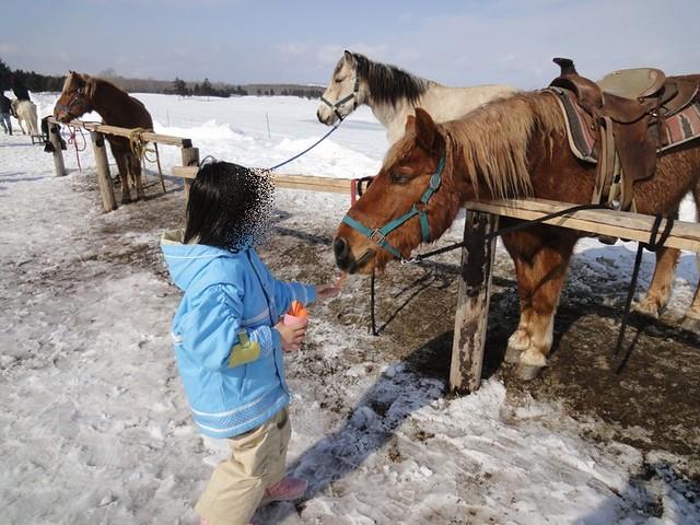 カップ1杯の人参を100円で購入し、馬にあげることが出来まし。|