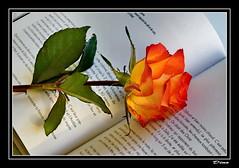 55-Un livre, une rose pour aimer !... (gio.dino3) Tags: rose rosa libro livre giodino3