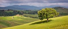 Tuscan Oak Light Show (Panorama Paul) Tags: italy tuscany valdorcia nikkorlenses nikfilters nikond800 wwwpaulbruinscoza paulbruinsphotography croporama