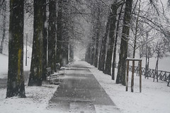 In una strada alberata - In a tree-lined street. (sinetempore) Tags: trees snow alberi torino snowflakes neve trunks benches turin panchine fiocchidineve tronchi parcodelvalentino inunastradaalberata inatreelinedstreet