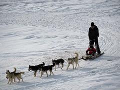 Portalet (Re Silveira) Tags: espaa dog snow canon spain espanha flickr nieve perro cachorro neve portalet formigal trineo tren