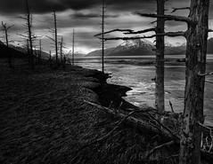 (Dan Moran AK) Tags: trees blackandwhite seascape alaska clouds dark landscape nikon shoreline d750 turnagainarm girdwoodalaska