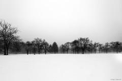 Harrybrook Park (Craig F. Barrett - Comments welcome) Tags: blackandwhite bw grain d4s nikkor1424mmf28 silverefexpro2 harrybrookpark nikond4s craigfbarrett