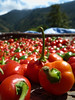 extremly hot chilis (S_Artur_M) Tags: travel red food india colour lumix chili panasonic indien sikkim tz10