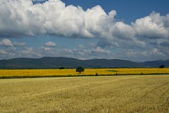 (sevdelinkata) Tags: field clouds landscape outdoor bulgaria sunflower