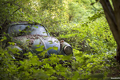 Cox forgotten (popRMP) Tags: cox vw nikon forgotten lost urbex vert green foret d4s 2470 cars voiture extrieur beetle