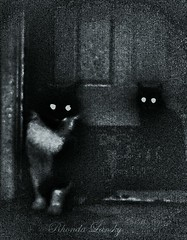 Ghost cats (rhonda_lansky) Tags: blackandwhite bw cats monochrome cat dark scary darkness surrealism ghost surreal creepy spooky poems darkart catseyes ghostcat shortstories creepyeyes ghostcats lansky sistercats rhondalansky