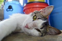 S E L F I E (Tato Avila) Tags: animal cat colombia bigotes colores gato vida campo felinos clido