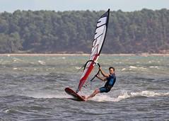 Aug0316a (Mike Millard) Tags: hamworthypark pooleharbour windsurfers