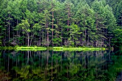 (tez-guitar) Tags: pond water reflection reflections wood forest tree trees green summer pentax pentaxart