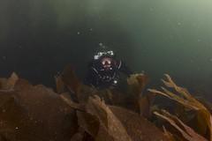 20160803-Eyemouth19 (Dacmirc) Tags: eyemouth diving ukdiving rebreather