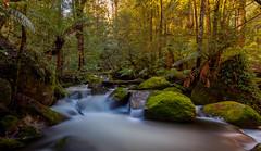 Taggerty Cascades,Victoria,Australia