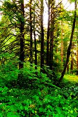 B1BBEST VAN DOZER WOODS-03799 (Gerry Slabaugh) Tags: oregon coast gerryslabaugh green van dozer woods trees mossy