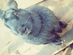 Coelha 1 (tatiana_castro) Tags: coelho animal natureza nature fofo cute bunny rabbit lovely