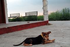[dog lifestyle] (tyronerodovalho1) Tags: india indian himalaia mountains moutain rishikeshi uttarakhand ganges river travel life