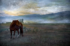 over yonder (laura's POV) Tags: ranch morning sky horse sun mist mountains texture nature field sunshine animal fog clouds dawn quiet peace farm meadow peaceful calm jackson pasture valley wyoming jacksonhole equine bucolic newday lauraspointofview lauraspov sonyar7ii