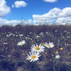 iPhone 6s (Omar Alnaqbi) Tags: yallow summer clouds green blue sunrise white flower