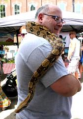 At the Farmer's Market (imjackhandy) Tags: knoxville farmersmarket snake tennessee python marketsquare yesssssssss