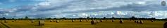 da gibt's noch mehr - there're even more (victorlaszlo73) Tags: greifswald ernte mecklenburgvorpommern sonnig sunny wolkig cloudy harvest