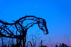 Bones of Branches, Skin of Sky (sidewinder_7777) Tags: sculpture art garden dusk butterfield branches horse