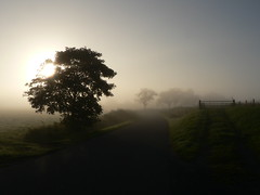 Morning's at seven... (achatphoenix) Tags: morning morgensumsieben tree road enroute eastfrisia dawn foggy mist misty rural arbre ostfriesland ontour street strase