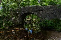 Bridge Over Meavy (trevorhicks) Tags: dartmoor river meavy bridge water trees canon 6d tamron