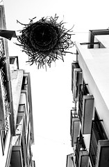 Look. Up. (CWhatPhotos) Tags: benidorm spain spanish resort costa blanca photographs photograph pics pictures pic picture image images foto fotos photography artistic cwhatphotos that have which with contain em10 omd olympus esystem four thirds digital camera lens olympusem10 mk ii 43 mft micro seaside holiday september 2016 street life walk sun shine sunshine sea sand paths path cobbled