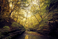 Mantra of Autumn (Anthonypresley1) Tags: illinois anthony presley anthonypresley landscape nature tree trees leaf leaves water gold green brown yellow sky starved rock old retro vintage