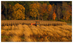 Quitting Time (Joe Geronimo) Tags: fall pumpkins newyork tractor farm autumn fingerlakes canoeing kayaking hiking halloween
