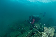 se3500_IMG_1106_ver2 (OKANO14) Tags: scuba diving hong kong