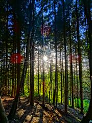 Walton Hill Mountain Bike Trail (jwelr) Tags: clent waltonhill england halesowen worcestershire west midlands trees sun path woodland