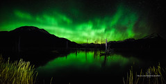 Ghostly glow (Traylor Photography) Tags: grass night northernlights landscape travelphotography nature mountains alyeska panorama snow solarstorm auroraborealis colors girdwood sewardhighway alaska anchorage tall