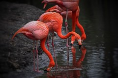 .pretty birds. (allyson.marie) Tags: feathers nature water birds pink pinkfloyd