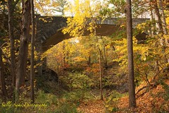 IMG_8988 (Sally Knox Sakshaug) Tags: letchworth state park new york autumn fall bright sunshine grandcanyonoftheeast portagecanyon october outdoors nature scenic pretty beautiful calm peaceful serene leaf leaves orange yellow red brown tree trees bush forest woods wood bark log trunk rock rocks grey gray shale wooded scene bridge stone arch archway partial artsy below angle upward sky underneath