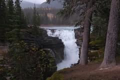 Athabasca Falls (Larry Myhre) Tags: jaspernationalpark alberta canada rockymountains canadianrockies icefieldsparkway athabascafalls waterfall falls scenic bcalbertasept2016