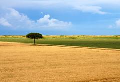 i colori della natura (maxlancio) Tags: colori colors delta deltadelpo giallo verde azzurro striscia pianta albero