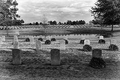 field of wreaths (minus6 (tuan)) Tags: minus6 fieldofwreaths