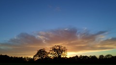 Trees silhouetted against the setting sun (35mmMan) Tags: park autumn trees sunset silhouette clouds skies dusk hatfieldhouse android hertfordshire herts hatfieldpark samsungkzoom