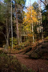 The Trail To Ash cave (thoeflich) Tags: fall autumncolors ashcave hockinghillsstatepark falllandscape