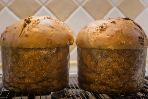 Homemade Panettone IMG_2507 by Nicola since 1972, on Flickr